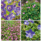 Collection 4 Geranium