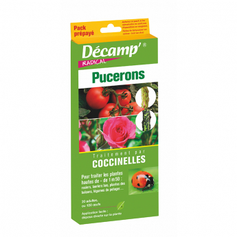 COCCINELLES PACK PREPAYE Decamp