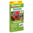 Chrysopes (Chrysoperla camea) PACK PREPAYE Décamp'®