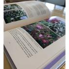 Livre Secrets de roses - Jean Claude Foucard