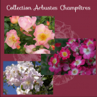 Collection ARBUSTRES CHAMPETRES