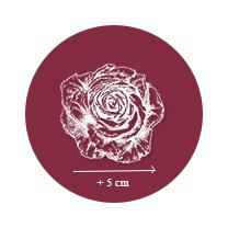 Rosiers Arbustifs à grandes fleurs