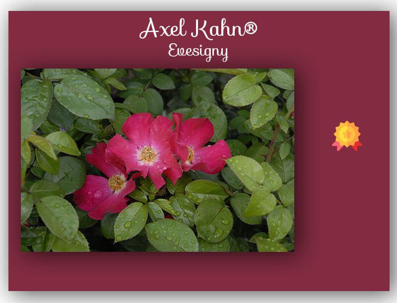concours de roses Axel Kahn