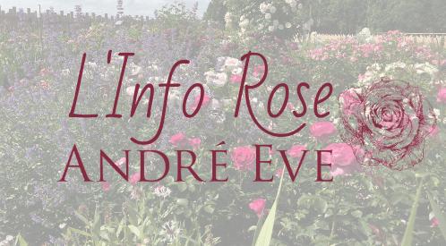 Info Rose